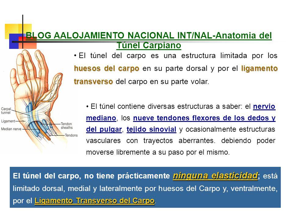 BLOG AALOJAMIENTO NACIONAL INT/NAL-Anatomia del Túnel Carpiano