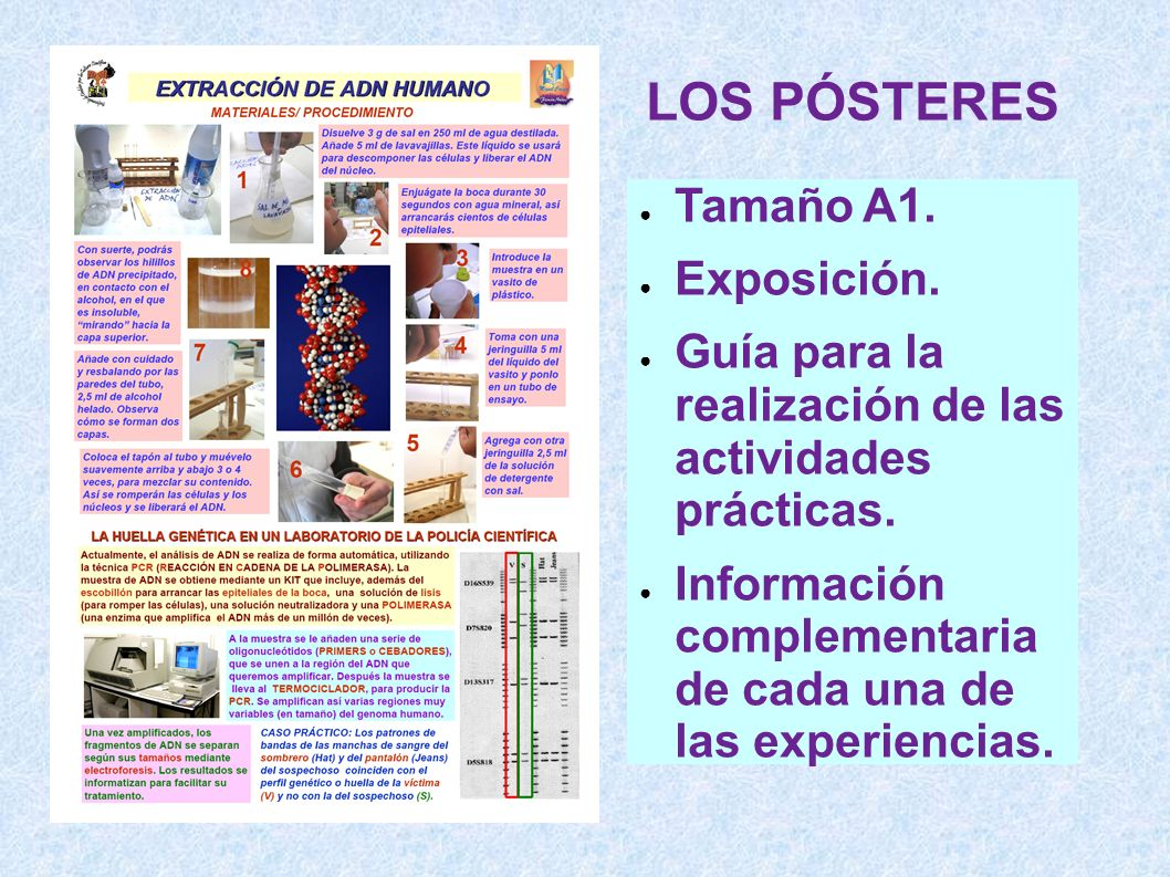 LOS PÓSTERES Tamaño A1. Exposición.