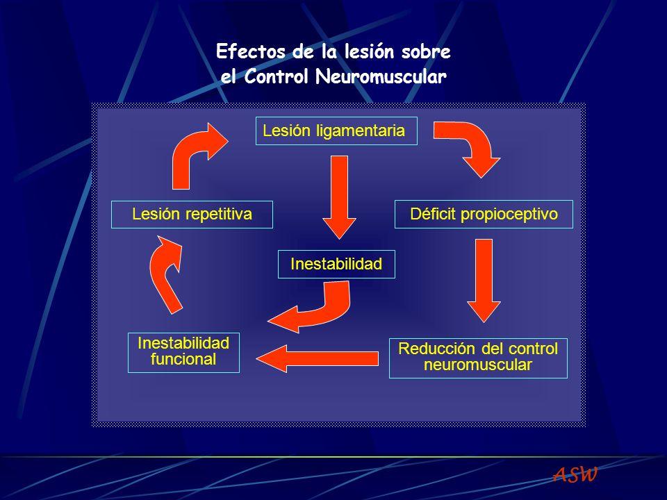 Efectos de la lesión sobre el Control Neuromuscular