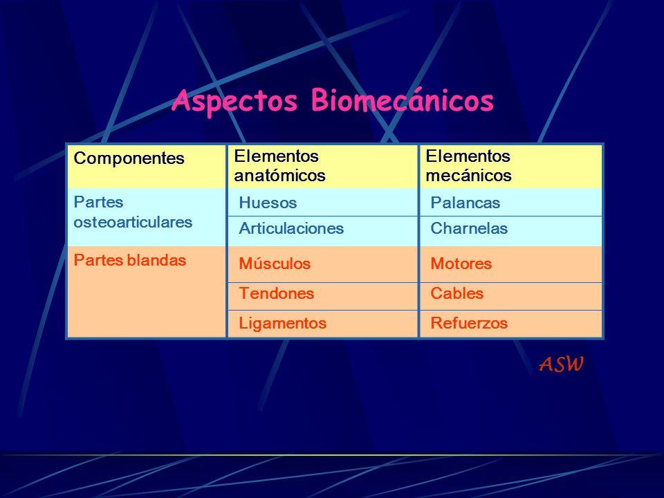 Aspectos Biomecánicos