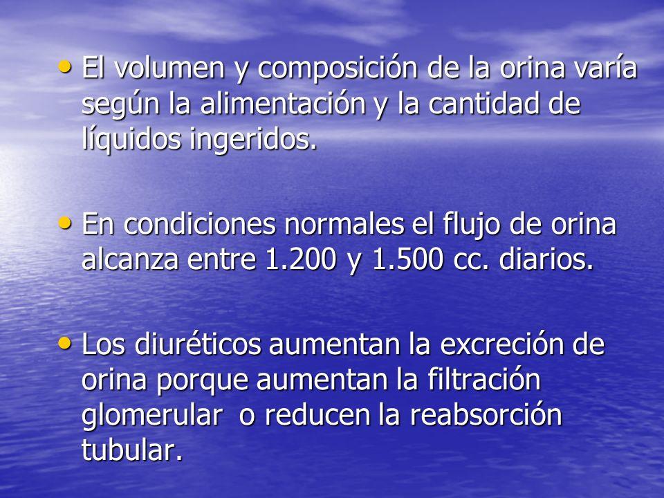 El volumen y composición de la orina varía según la alimentación y la cantidad de líquidos ingeridos.
