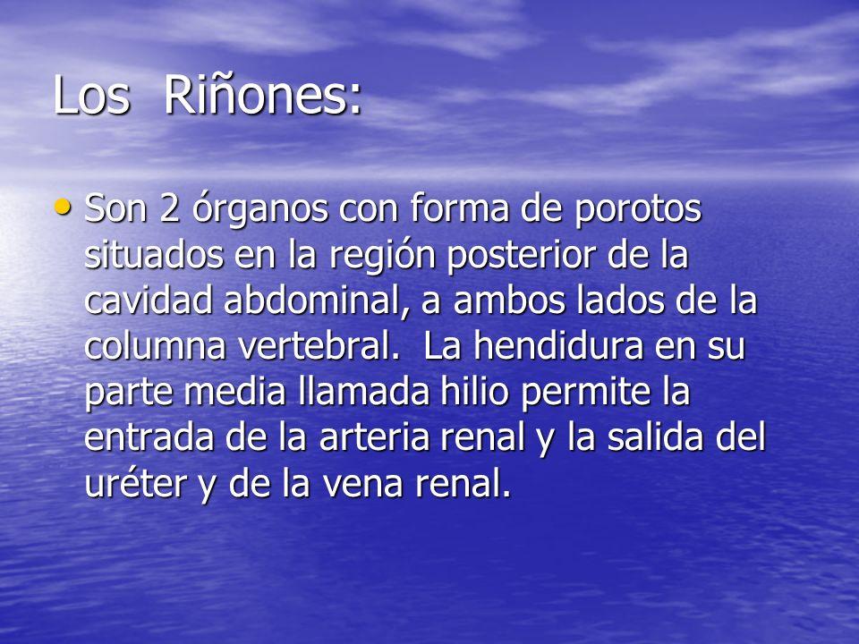 Los Riñones: