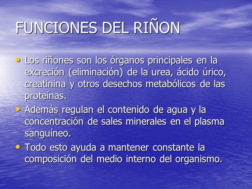 FUNCIONES DEL RIÑON