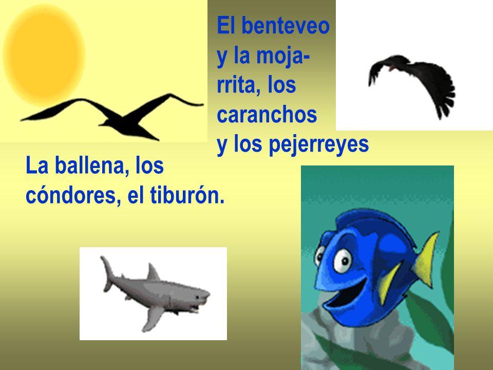 El benteveo y la moja- rrita, los caranchos y los pejerreyes La ballena, los cóndores, el tiburón.