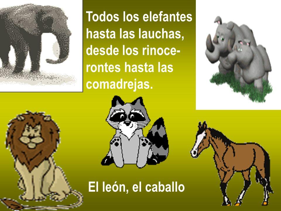 Todos los elefantes hasta las lauchas, desde los rinoce- rontes hasta las.