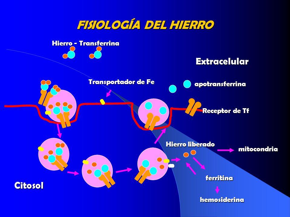 FISIOLOGÍA DEL HIERRO Extracelular Citosol Hierro - Transferrina