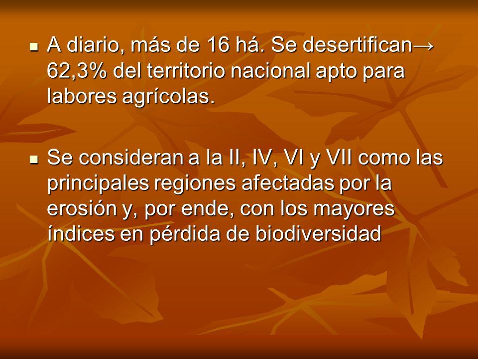 A diario, más de 16 há. Se desertifican→ 62,3% del territorio nacional apto para labores agrícolas.