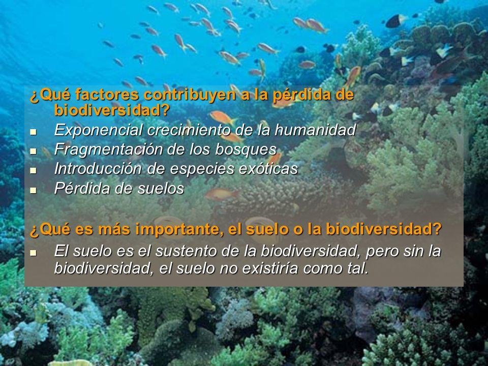 ¿Qué factores contribuyen a la pérdida de biodiversidad