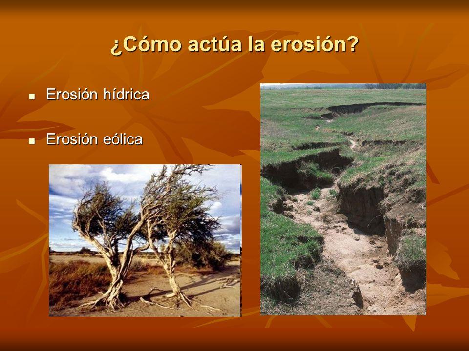 ¿Cómo actúa la erosión Erosión hídrica Erosión eólica