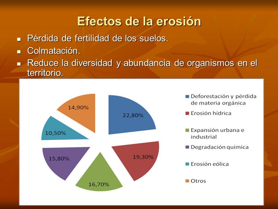 Efectos de la erosión Pérdida de fertilidad de los suelos.