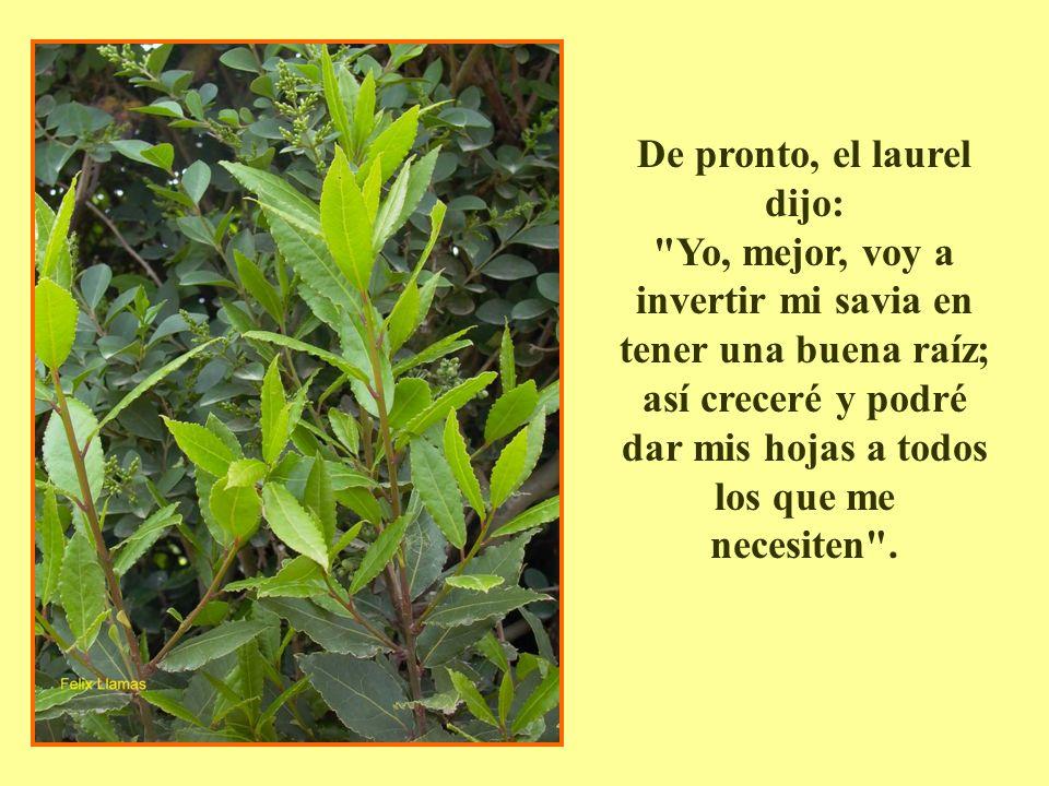 De pronto, el laurel dijo: Yo, mejor, voy a invertir mi savia en tener una buena raíz; así creceré y podré dar mis hojas a todos los que me necesiten .