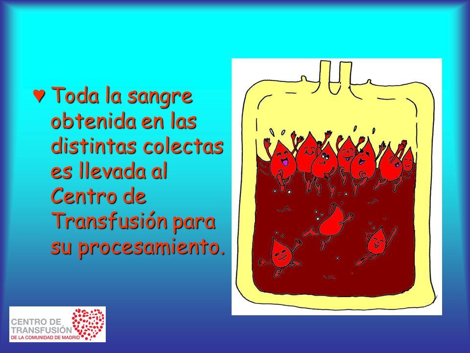 Toda la sangre obtenida en las distintas colectas es llevada al Centro de Transfusión para su procesamiento.