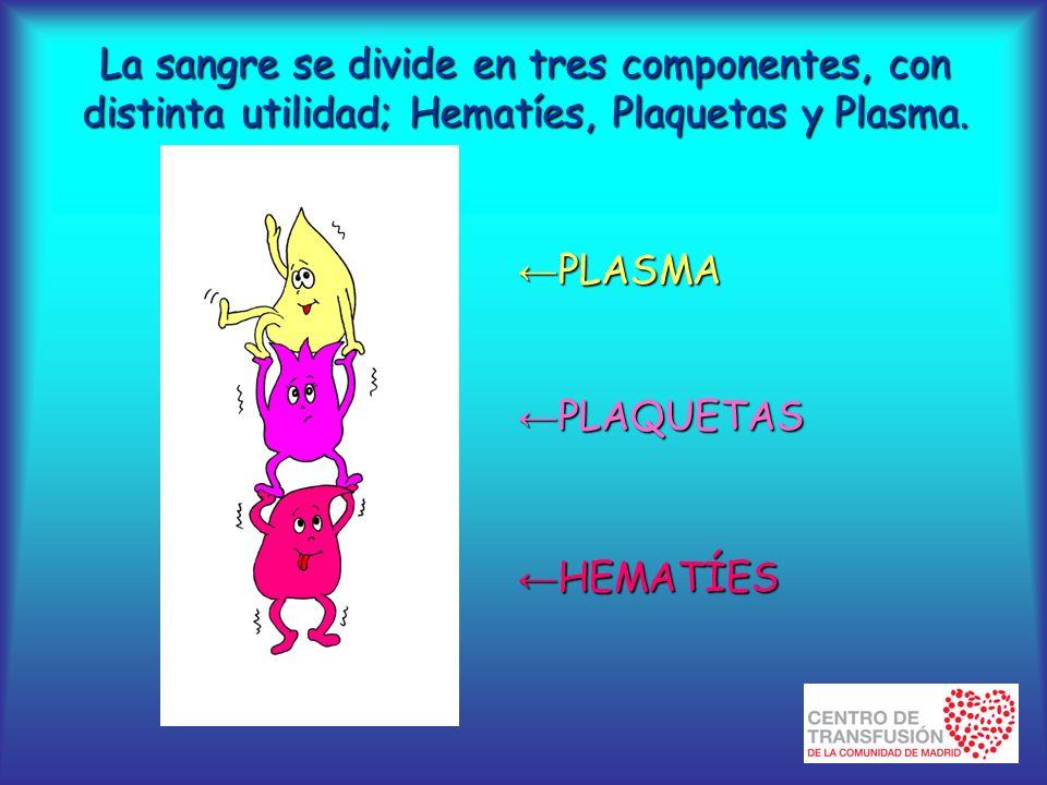 La sangre se divide en tres componentes, con distinta utilidad; Hematíes, Plaquetas y Plasma.