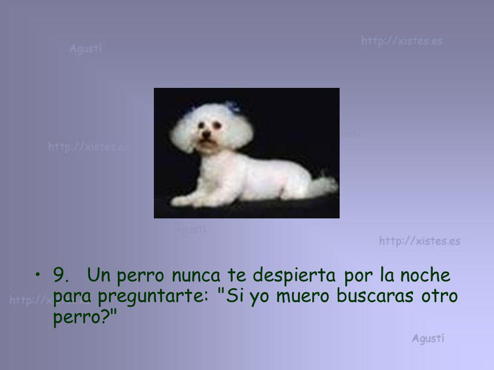 9. Un perro nunca te despierta por la noche para preguntarte: Si yo muero buscaras otro perro