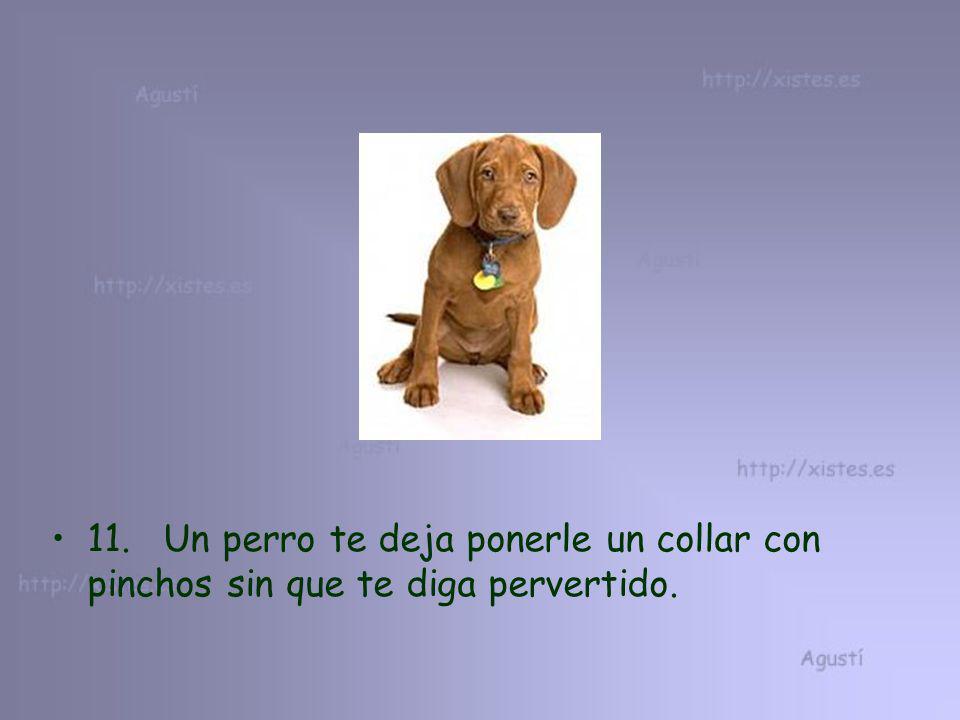 11. Un perro te deja ponerle un collar con pinchos sin que te diga pervertido.