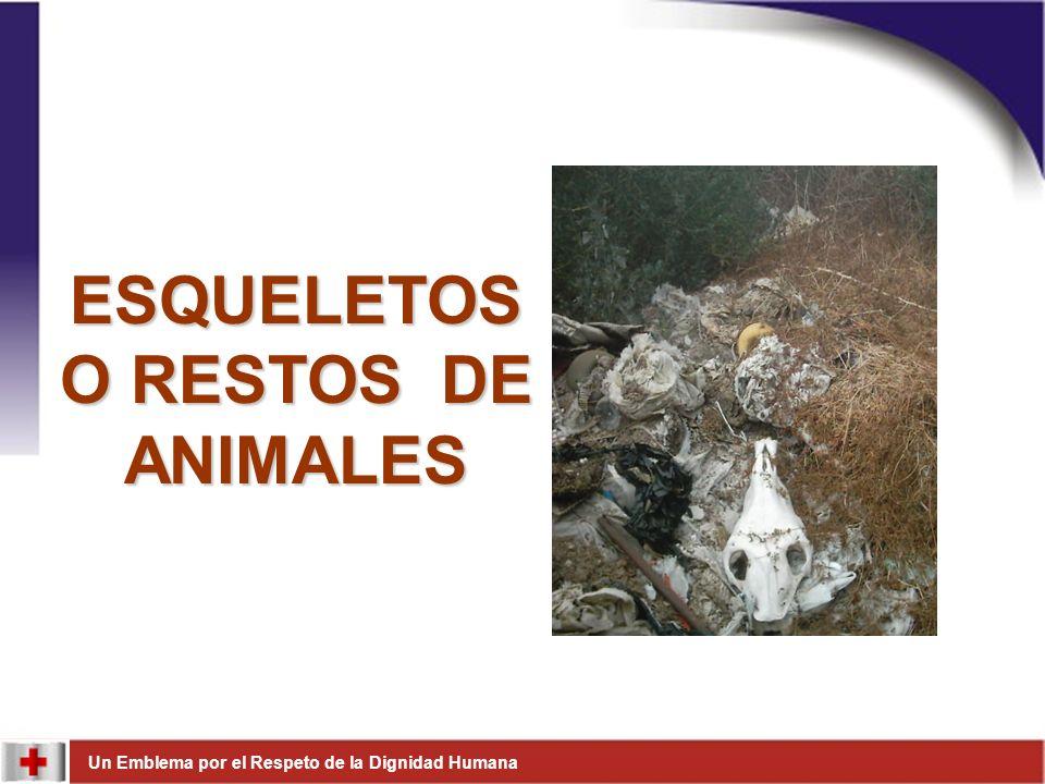 ESQUELETOS O RESTOS DE ANIMALES