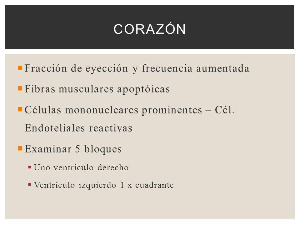 Corazón Fracción de eyección y frecuencia aumentada