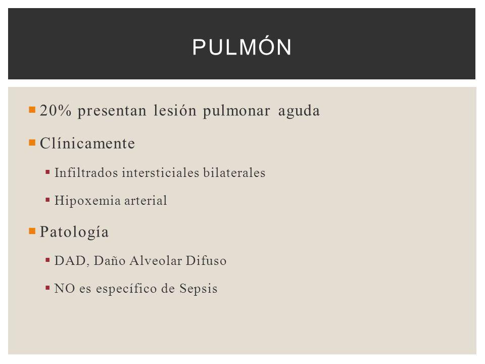 Pulmón 20% presentan lesión pulmonar aguda Clínicamente Patología