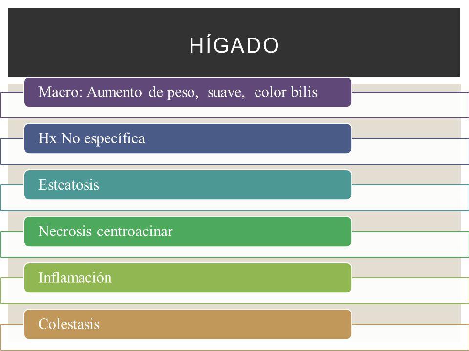 Hígado Macro: Aumento de peso, suave, color bilis Hx No específica