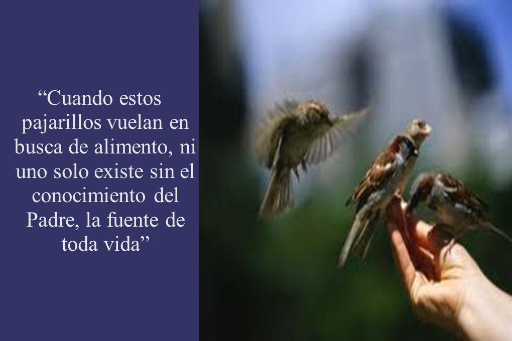 Cuando estos pajarillos vuelan en busca de alimento, ni uno solo existe sin el conocimiento del Padre, la fuente de toda vida