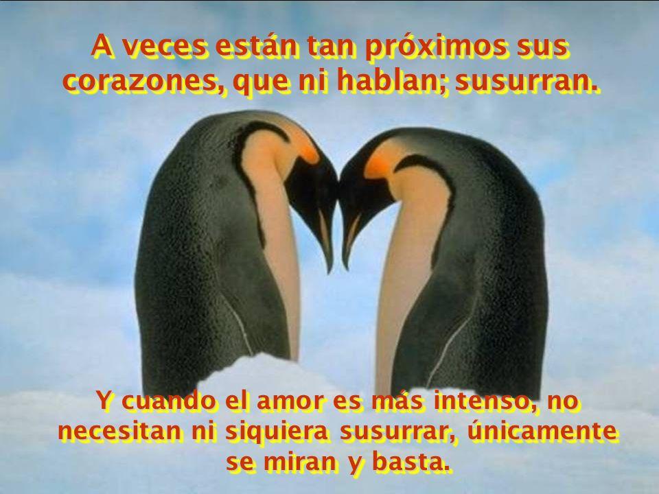 A veces están tan próximos sus corazones, que ni hablan; susurran.