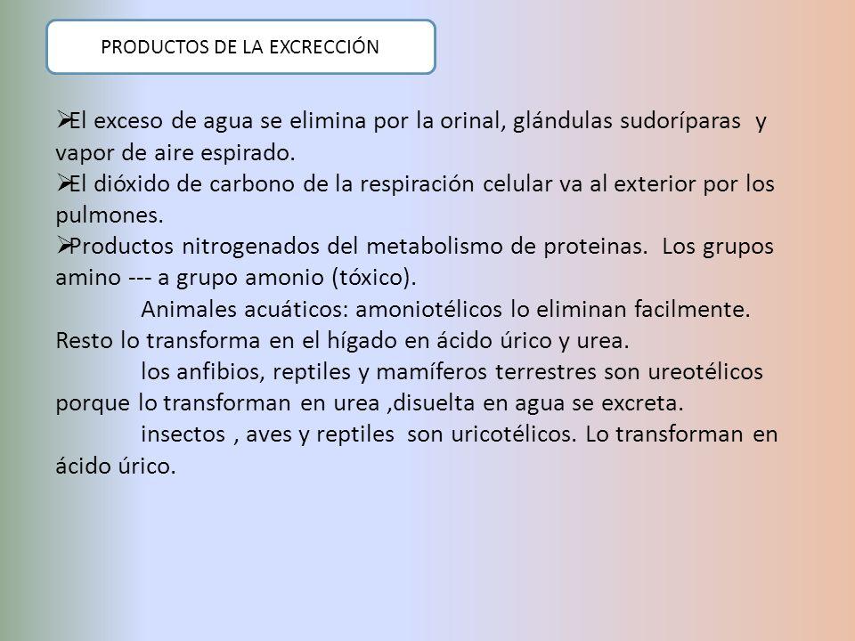 PRODUCTOS DE LA EXCRECCIÓN