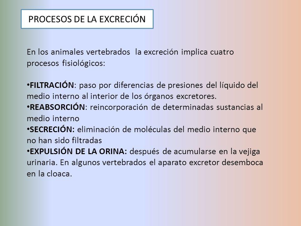 PROCESOS DE LA EXCRECIÓN