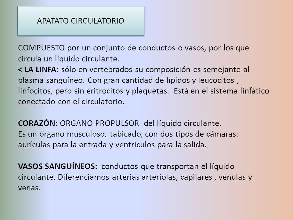 APATATO CIRCULATORIO COMPUESTO por un conjunto de conductos o vasos, por los que circula un líquido circulante.
