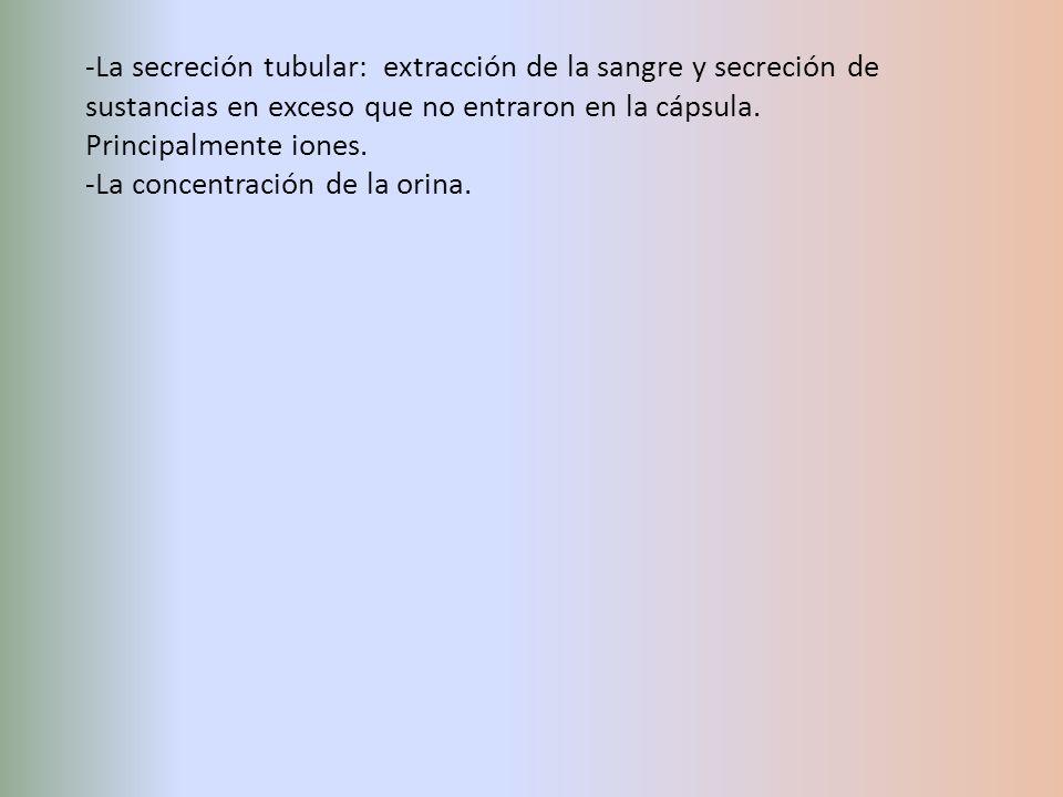 La secreción tubular: extracción de la sangre y secreción de sustancias en exceso que no entraron en la cápsula. Principalmente iones.