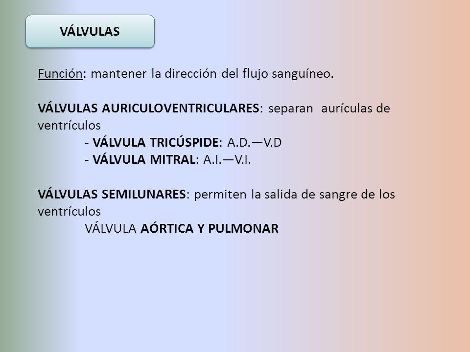 VÁLVULAS Función: mantener la dirección del flujo sanguíneo. VÁLVULAS AURICULOVENTRICULARES: separan aurículas de ventrículos.