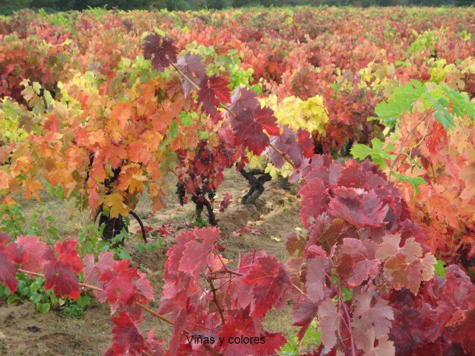 Viñas y colores
