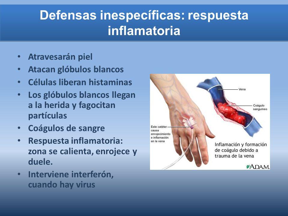 Defensas inespecíficas: respuesta inflamatoria