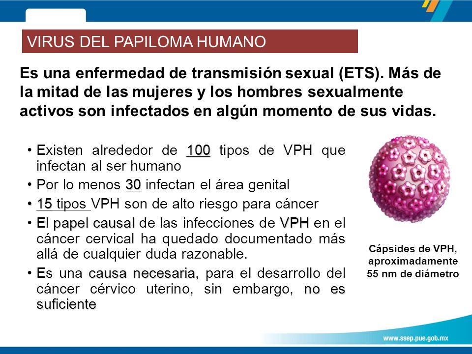 Cápsides de VPH, aproximadamente 55 nm de diámetro