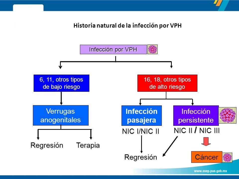Historia natural de la infección por VPH