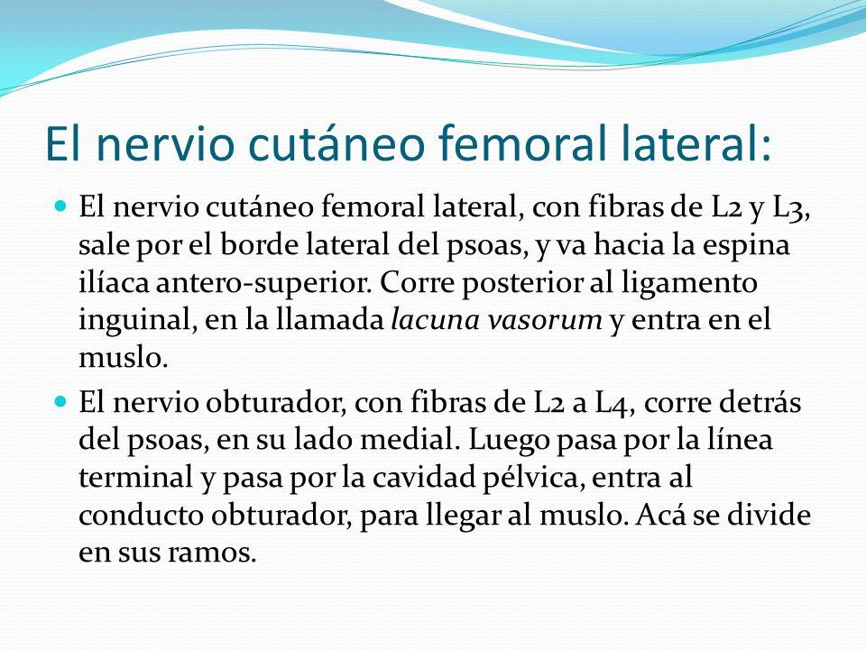 El nervio cutáneo femoral lateral: