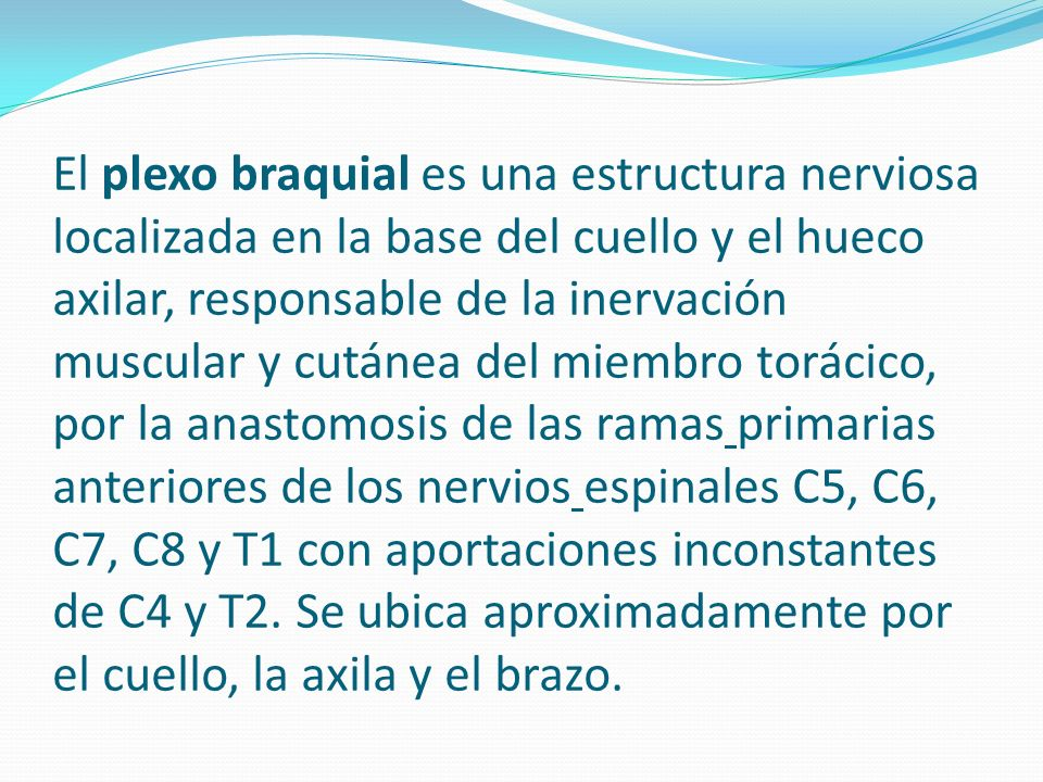 El plexo braquial es una estructura nerviosa localizada en la base del cuello y el hueco axilar, responsable de la inervación muscular y cutánea del miembro torácico, por la anastomosis de las ramas primarias anteriores de los nervios espinales C5, C6, C7, C8 y T1 con aportaciones inconstantes de C4 y T2.