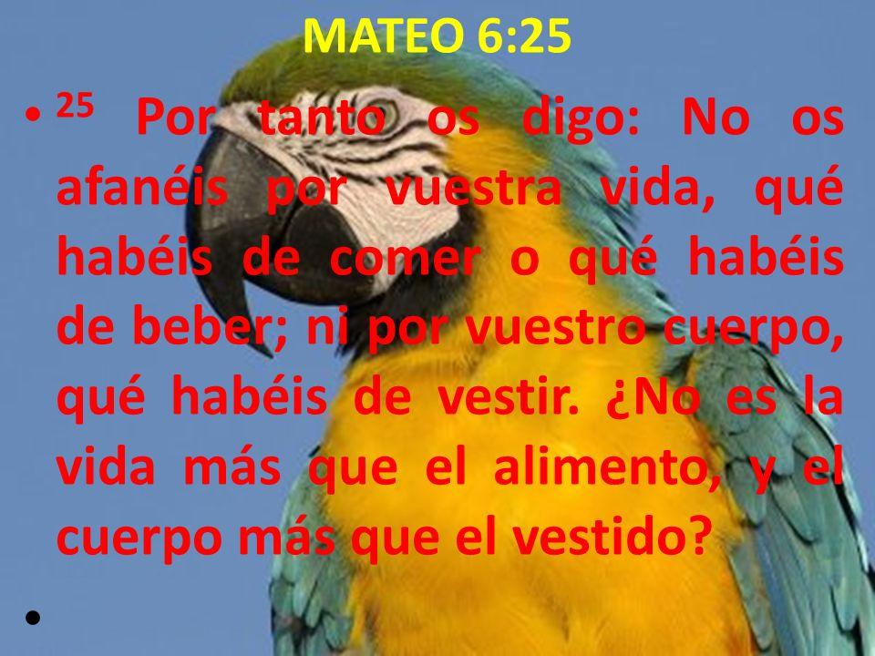 MATEO 6:25