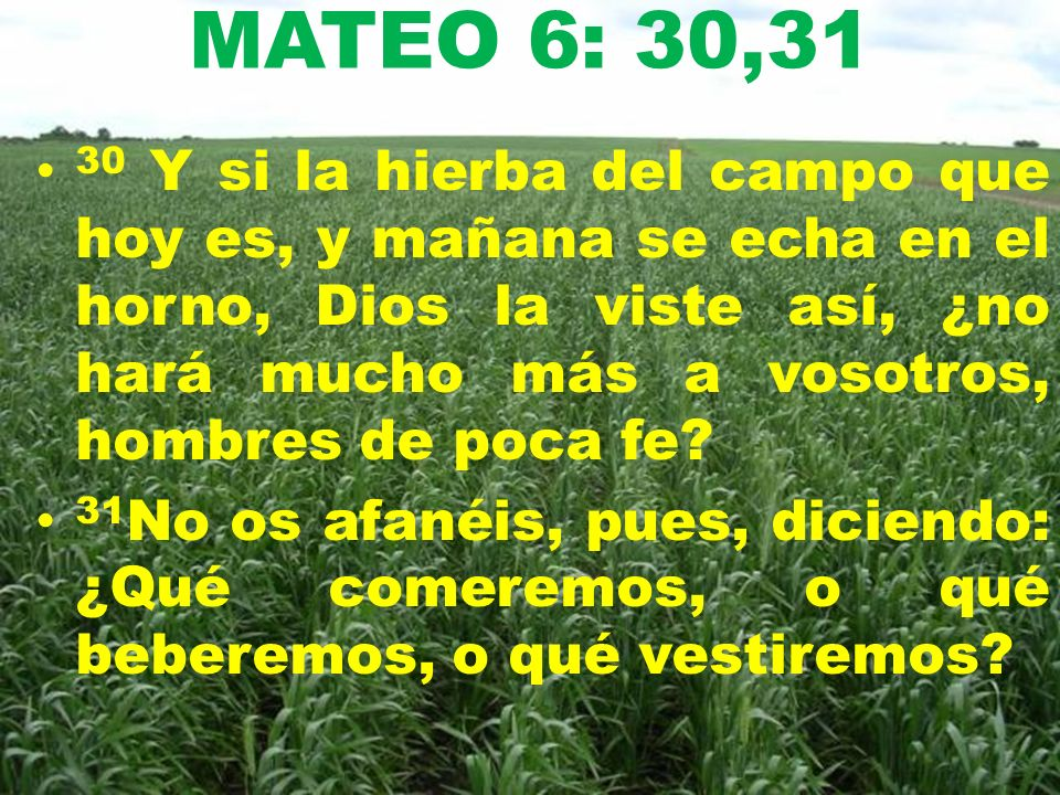 MATEO 6: 30,31