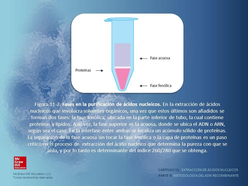 Figura 11-2. Fases en la purificación de ácidos nucleicos