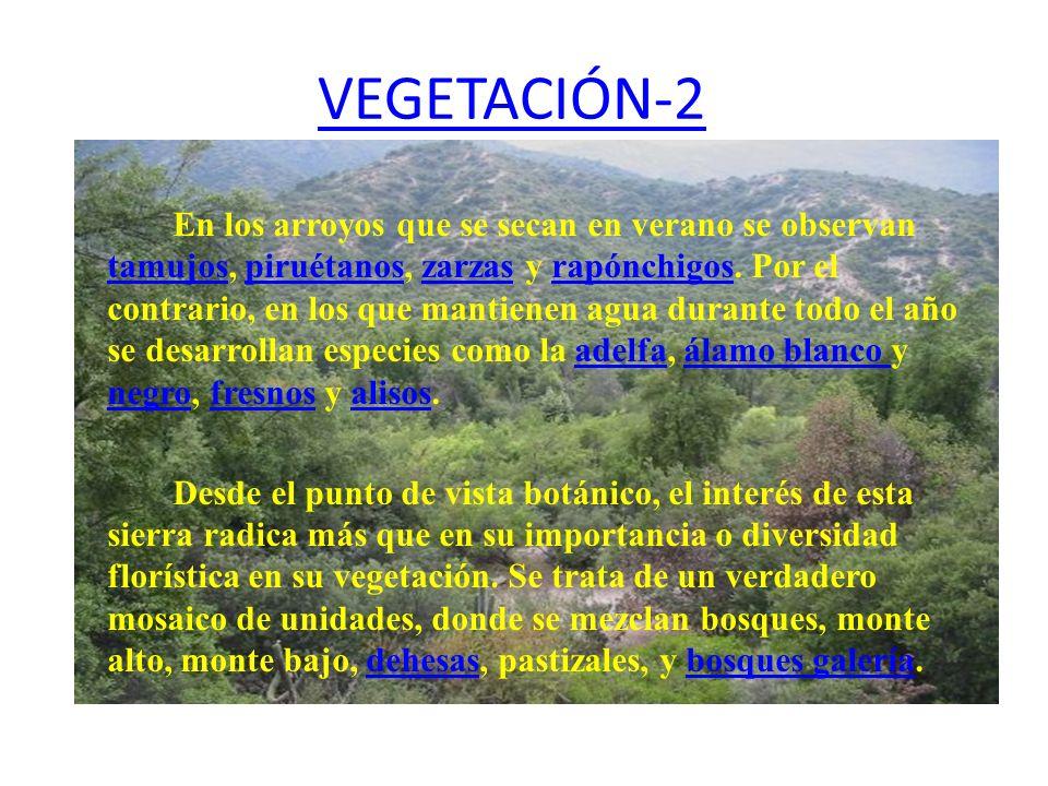 VEGETACIÓN-2