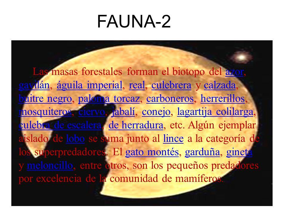 FAUNA-2
