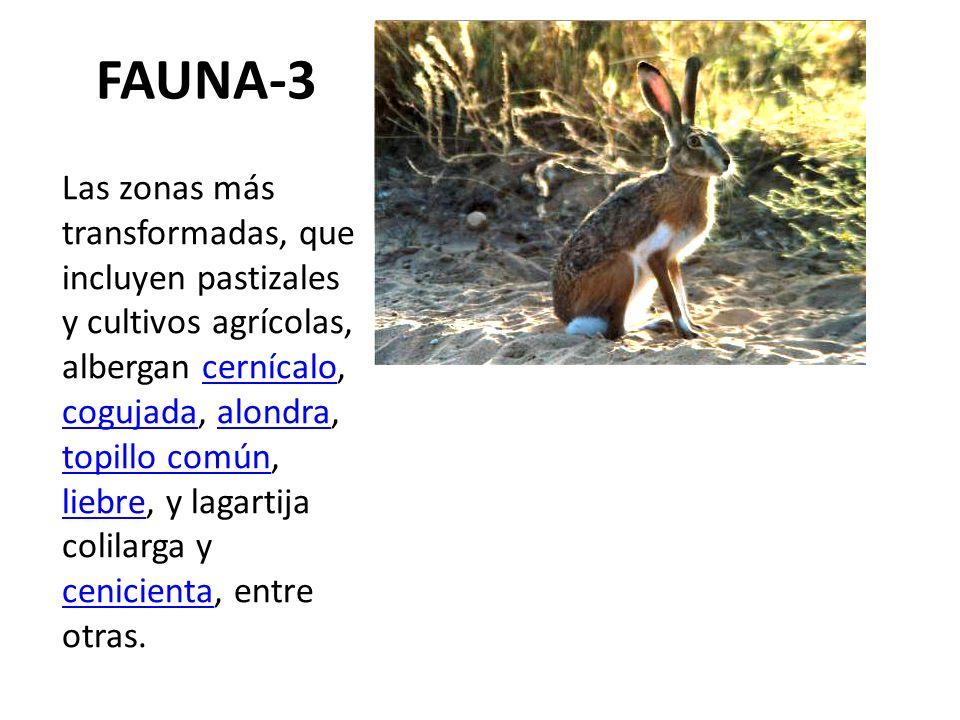 FAUNA-3