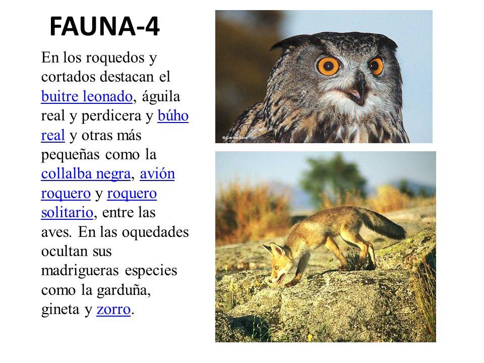 FAUNA-4