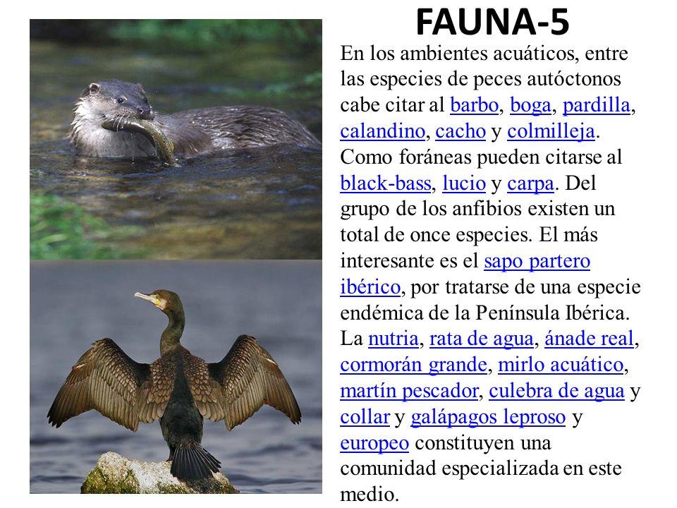 FAUNA-5