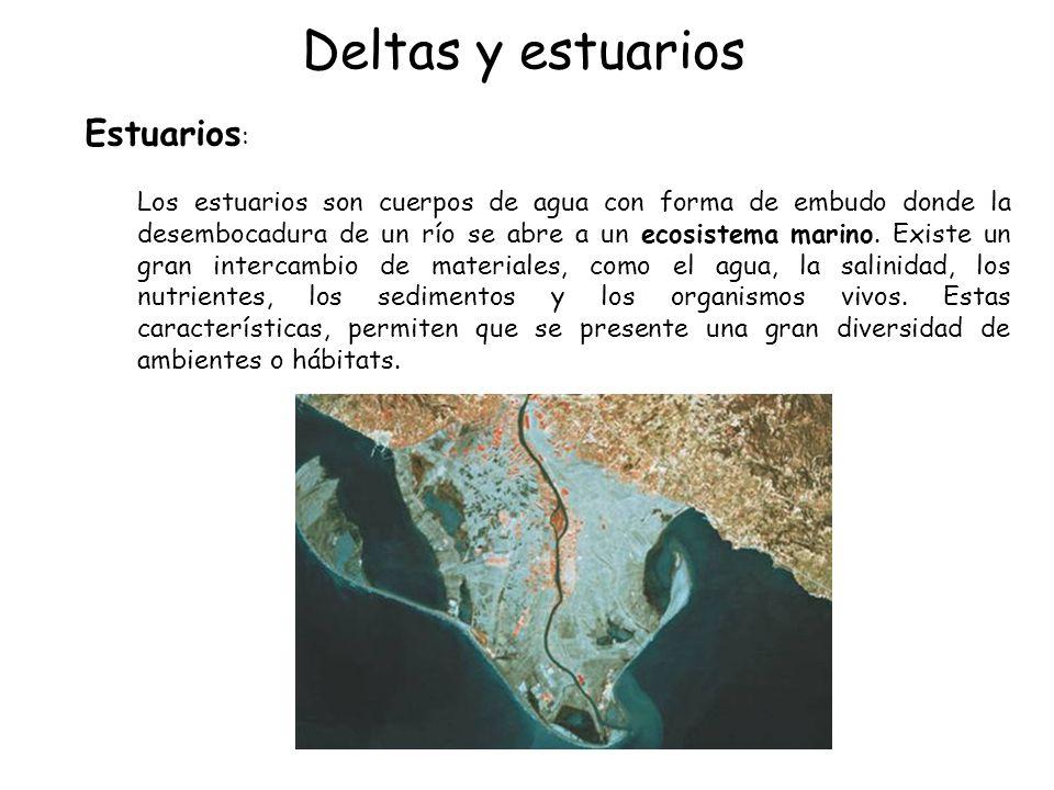Deltas y estuarios Estuarios: