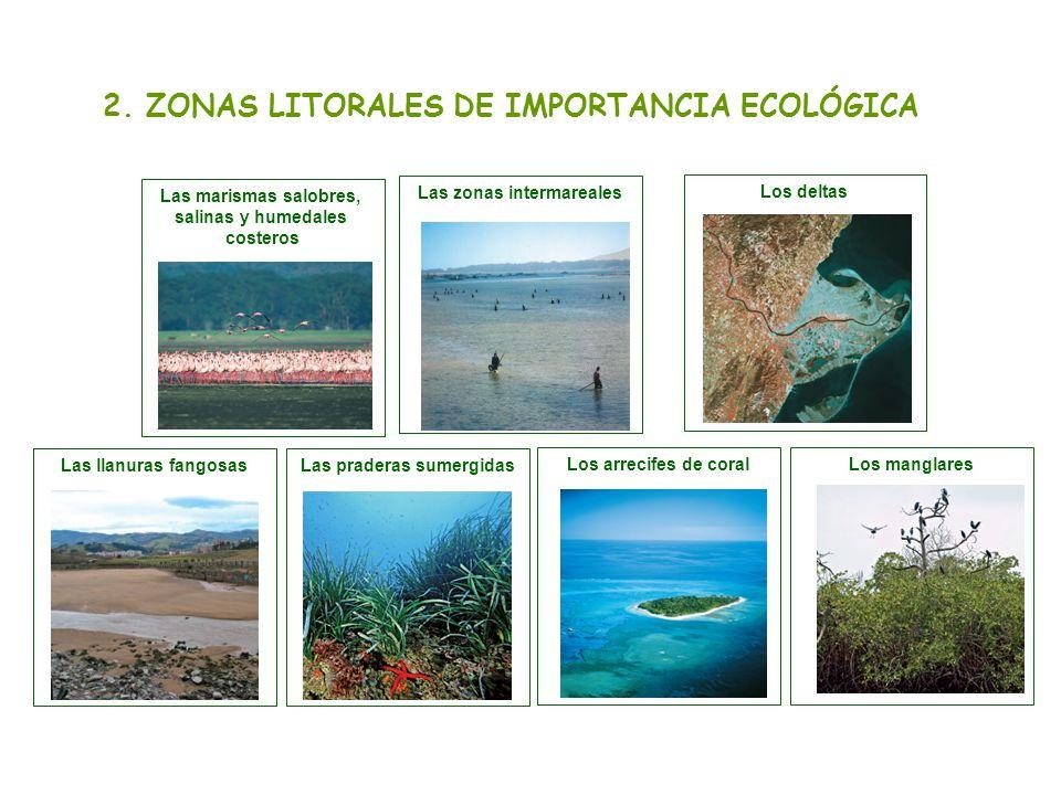 2. ZONAS LITORALES DE IMPORTANCIA ECOLÓGICA