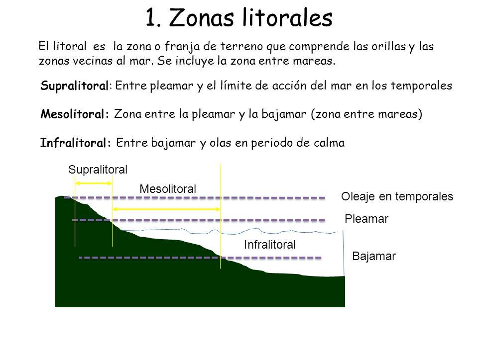 1. Zonas litorales El litoral es la zona o franja de terreno que comprende las orillas y las zonas vecinas al mar. Se incluye la zona entre mareas.