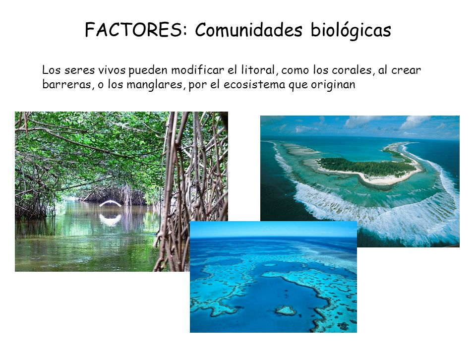 FACTORES: Comunidades biológicas