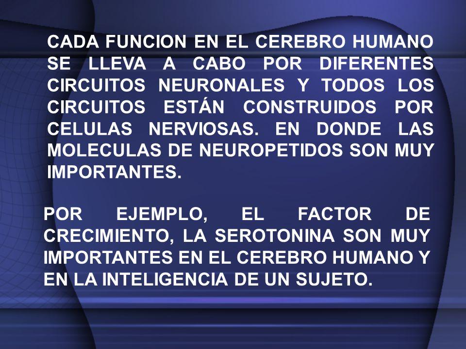 CADA FUNCION EN EL CEREBRO HUMANO SE LLEVA A CABO POR DIFERENTES CIRCUITOS NEURONALES Y TODOS LOS CIRCUITOS ESTÁN CONSTRUIDOS POR CELULAS NERVIOSAS. EN DONDE LAS MOLECULAS DE NEUROPETIDOS SON MUY IMPORTANTES.