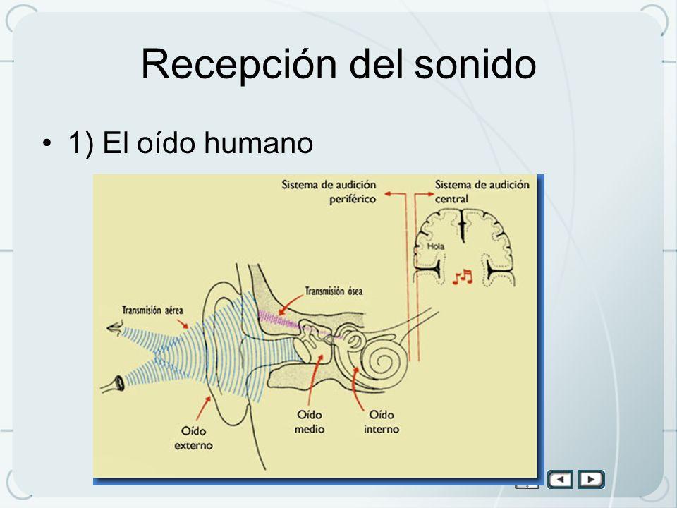 Recepción del sonido 1) El oído humano